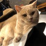 猫カフェの猫ちゃん
